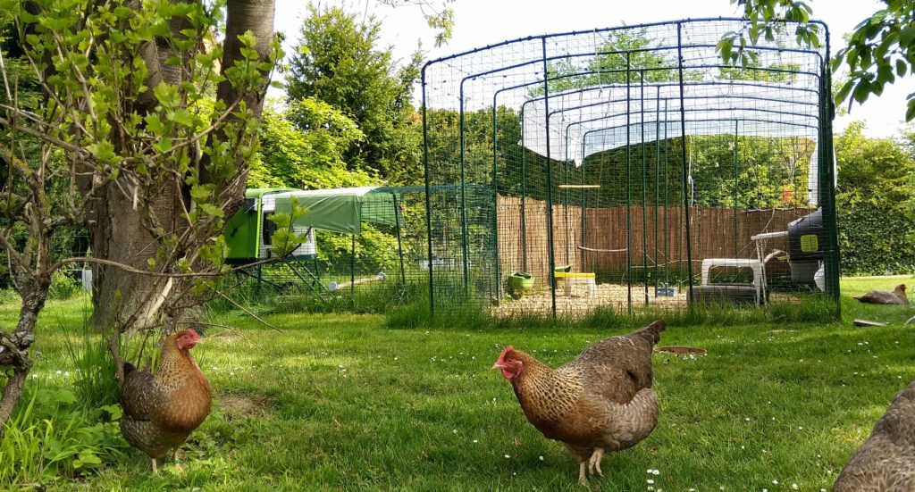 omlet blog france