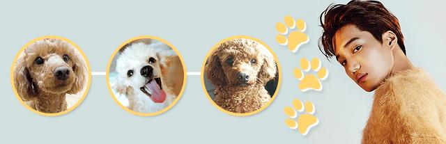 national puppy day kai