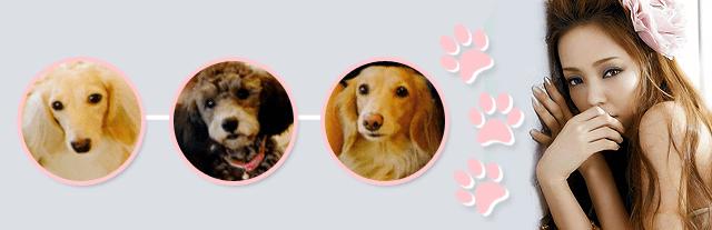 national puppy day namie amuro