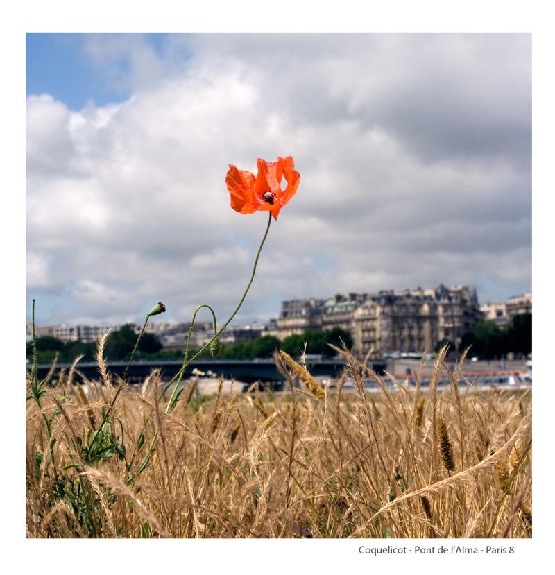 1-Coquelicot-Paris8bis