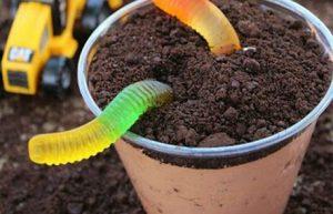 Pudding Summer Treats