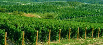 Приятное с полезным: в Тамани пройдёт забег по виноградникам