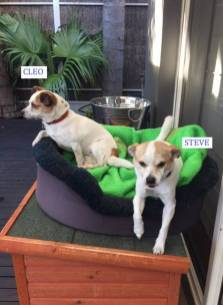 What makes my dogs (Cleo and Steve) special is that they are always so happy to see us, they love chasing each other about and love cuddles and tummy rubs! - Adriana