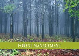 Forest and Environmental Management