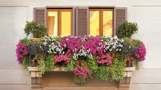 descubre ideas para decorar tu balcon con plantas