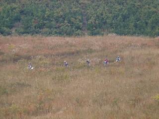 草原を駆け回る