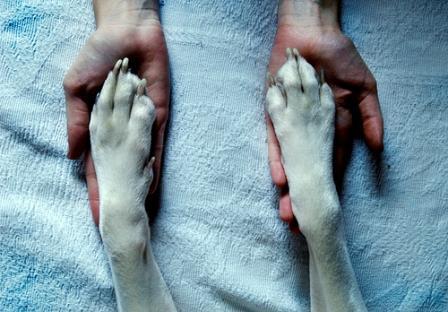 Pata y mano