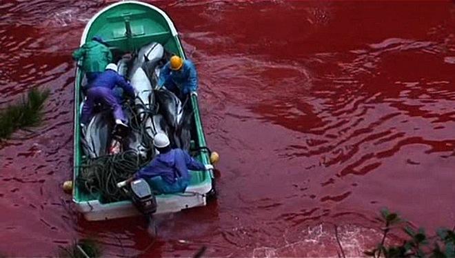 caza delfinesTaiji