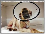 5: Tidus, perrito quemado vivo en Valencia y fallecido a causa de sus heridas. Los autores aún no han sido identificados.