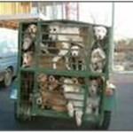 Transporte ilegal de perros de caza (Rehala)