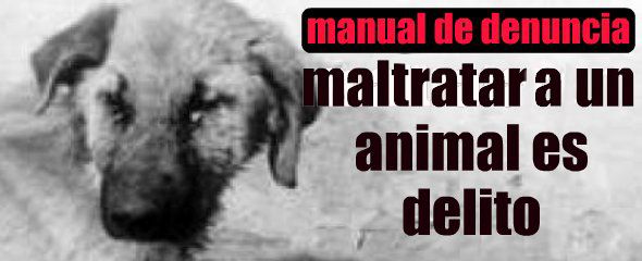 maltrato animal-manual denuncia