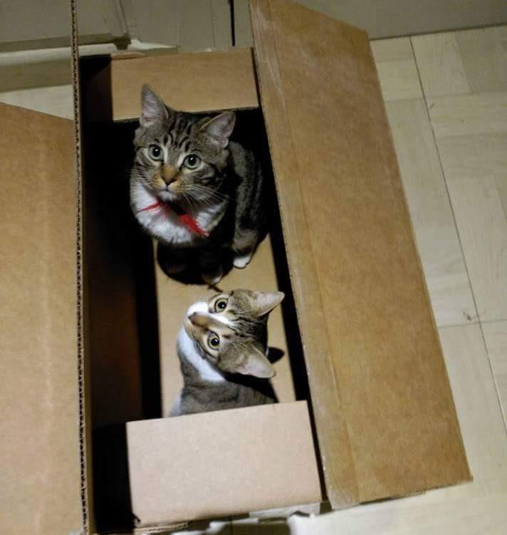 gatitos adoptados