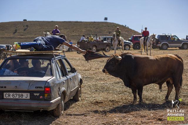 Un toro mira a un hombre que, desde el techo de un coche, le da en la cabeza con un paraguas.