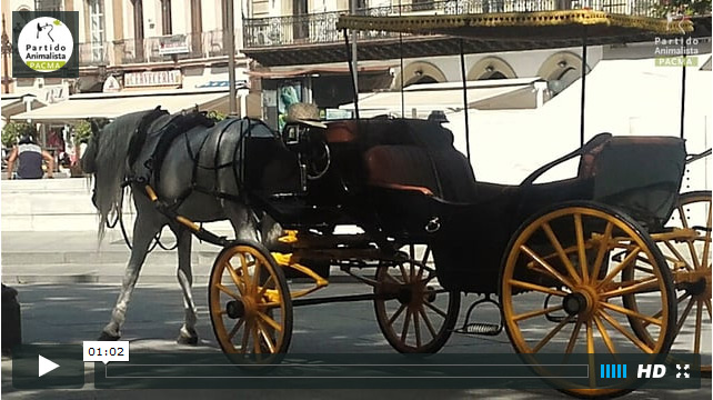video-informe-coches-de-caballos-sevilla