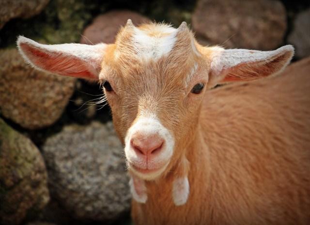 carta-de-los-derechos-universales-de-los-animales