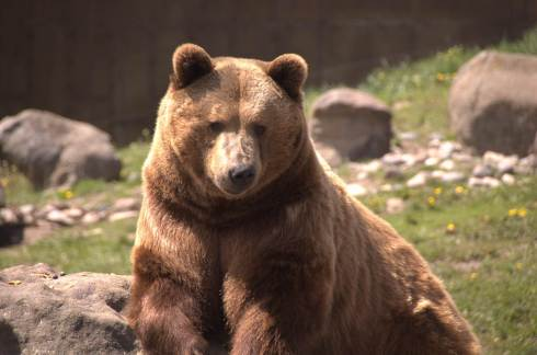 http://www.grizzlyencounter.org/