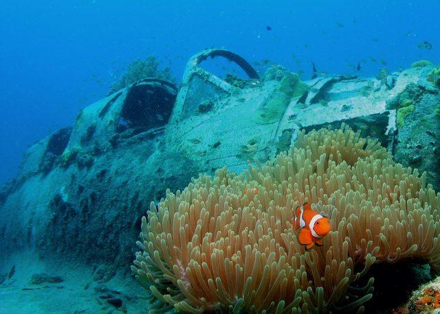 best scuba diving destinations papua new guinea