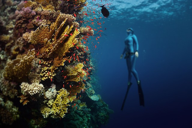 Freediving in the Red Sea