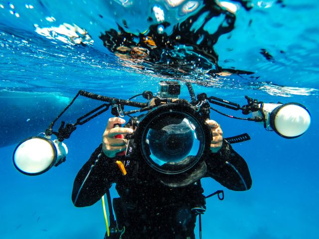 Digital Underwater Photographer - Camera - Underwater - Diver