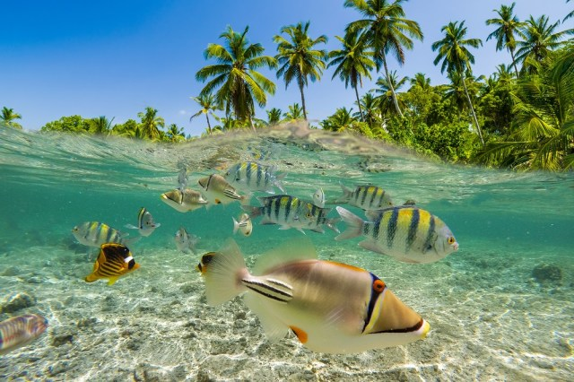 Several different species of fishes swimming together in the shallow waters around a tropical island beach