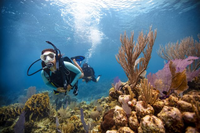 Two scuba divers underwater, enjoying an activity which raises an important question: is it correct to say dived or dove?