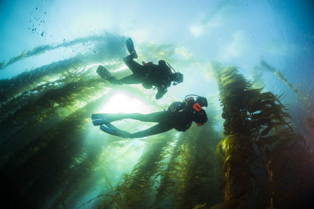 Kelp Forest - California - Underwater - Divemaster