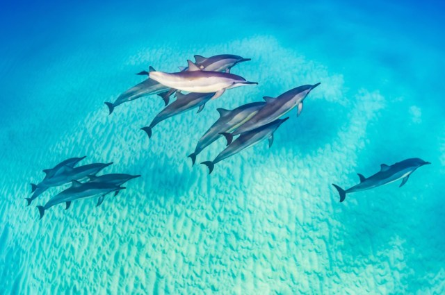 dolphins spotted while diving in Marsa Alam, Egypt