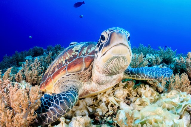 turtle spotted while diving in Marsa Alam, Egypt