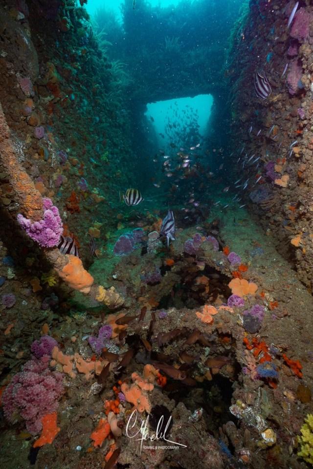 The Dredge-Australia-wreck-underwater