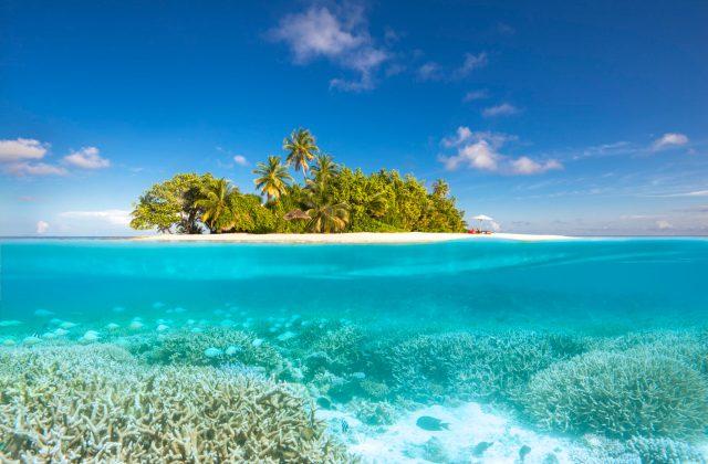 w maldives reef