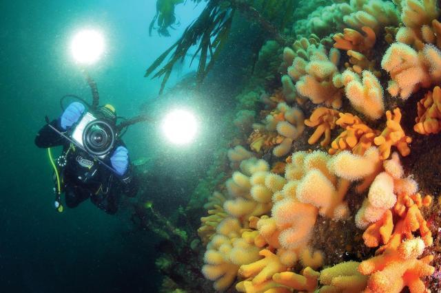 underwater shot of gulen resot house reef