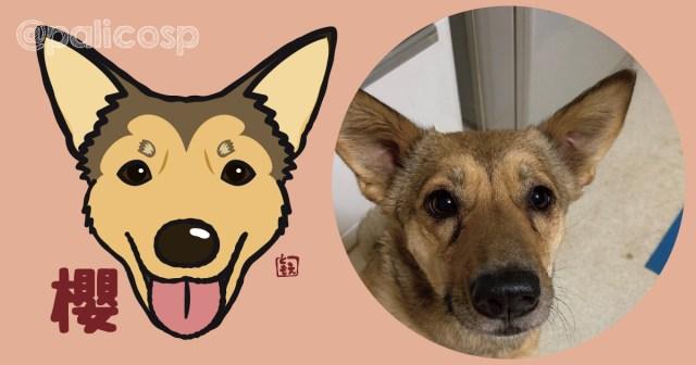 犬似顔絵イラスト 櫻