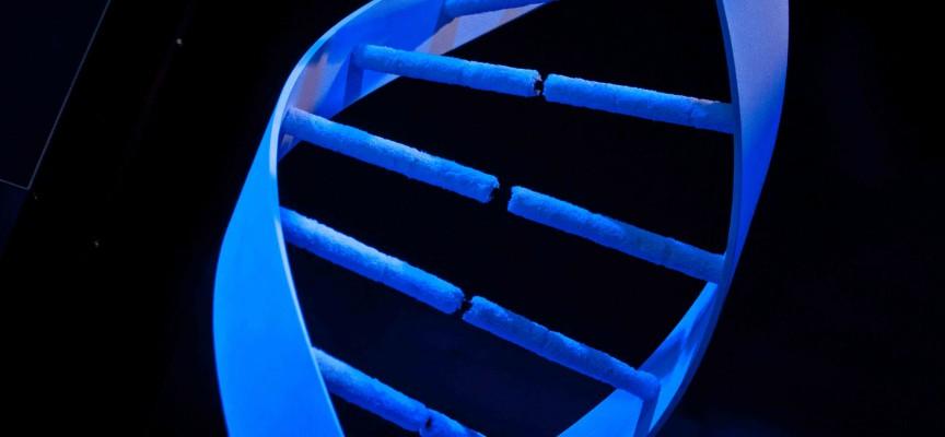 Un ADN géant à découvrir dans l'exposition du Pass