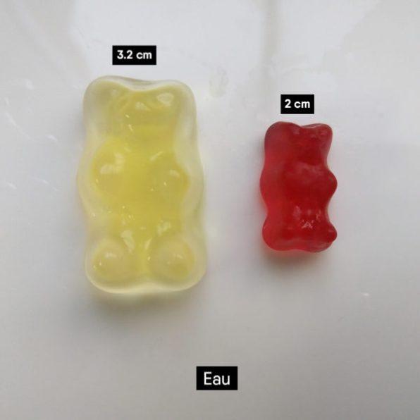 Bonbons oursons plongés dans l'eau