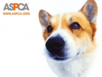 ASPCA-Dog
