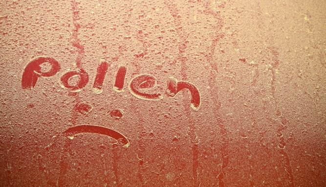 Pollen en hooikoorts