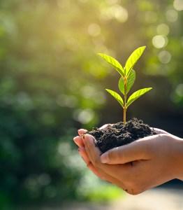 grow as a christian seo