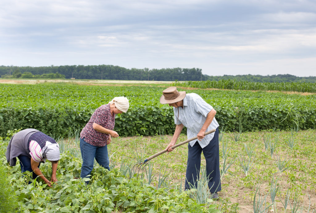 Resultado de imagem para agricultura familiar