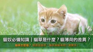 貓草與貓薄荷介紹!(內有種植方式)
