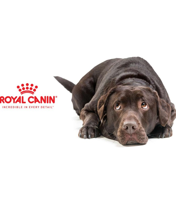 royal canin dog laying down looking at logo