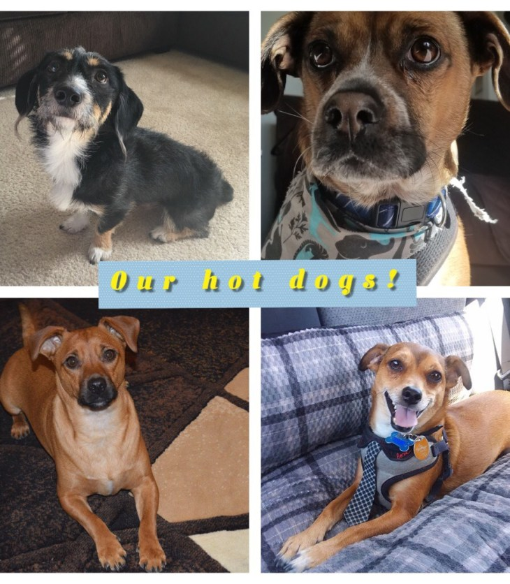 "Collage of our ""Hot Dogs"" here at PetFlow"
