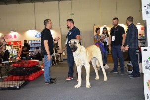 customer_with_kangal