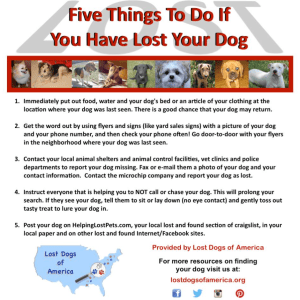 Five Things To Do If You Have Lost Your Dog