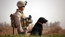 pic_giant_090314_SM_Military-Working-Dog