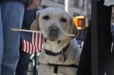 veterans-day-dog