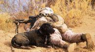 war-dog-land