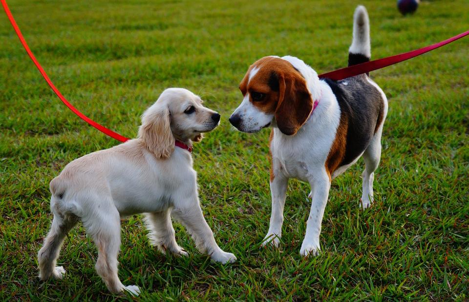 Dogs walking on leash in a park.