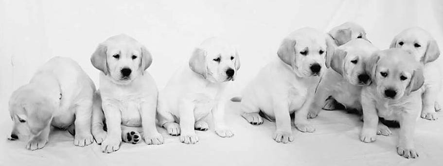 Autism Assistance Ireland Puppies Posing
