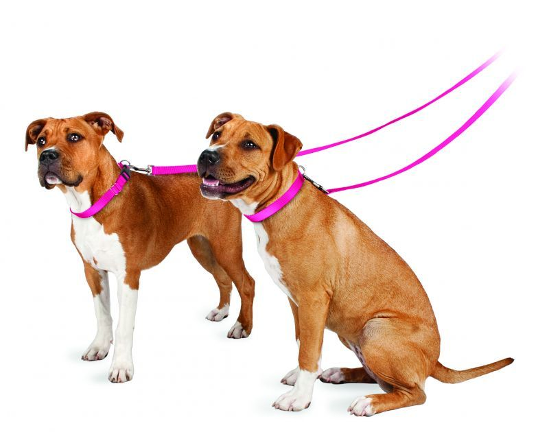 Dog on collar and lead