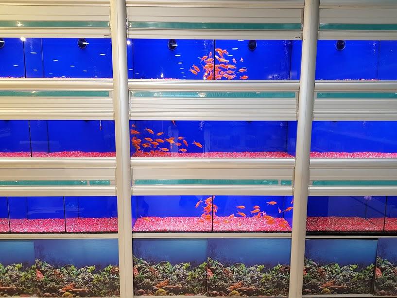 Petworld Tallaght Fish Tank